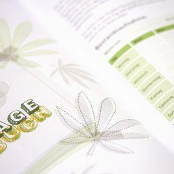 Basics 2, Leitfaden für jugendliche Cannabiskonsumenten